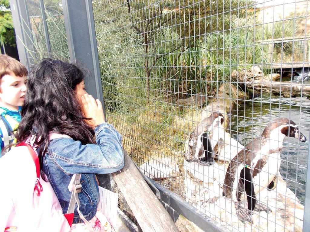 18-06-21_Zoo-08